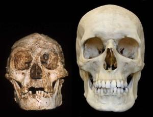 hobbit-homo-floresiensis-6
