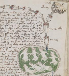Voynich_manuscript_bathtub2_example_78r_cropped
