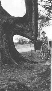 10-marker-trees-591x1024